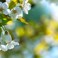 Aquapóniától a Maszat-hegyig: áprilisban fókuszban a fenntarthatóság és az európai irodalom