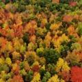 Vörös, barna, sárga – az ősz színei európai szólásokban és kifejezésekben