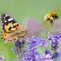 Új európai stratégia az élővilág változatosságának megóvásáért