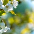 Április az Európa Pontban: fenntartható Európa egy csipetnyi Luxemburggal