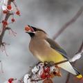 Segélykiáltás a természettől: fogynak a madaraink!