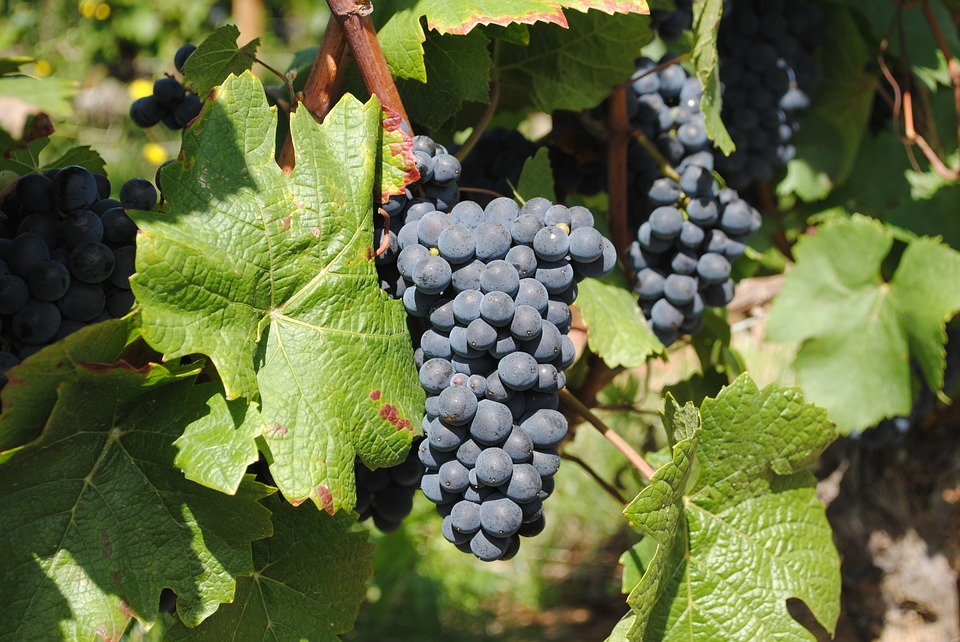 wine-2961938_960_720.jpg