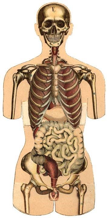 Könyv a női testről és belső szervekről (forrás: Aletta H. Jacobs: De Vrouw Haar bouw en haar inwendige organen