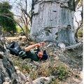 Harry herceg mindenkit arra kér: fotózzon le egy fát!