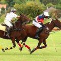 A sportág, amiért odavan a királyi család: a lovaspóló