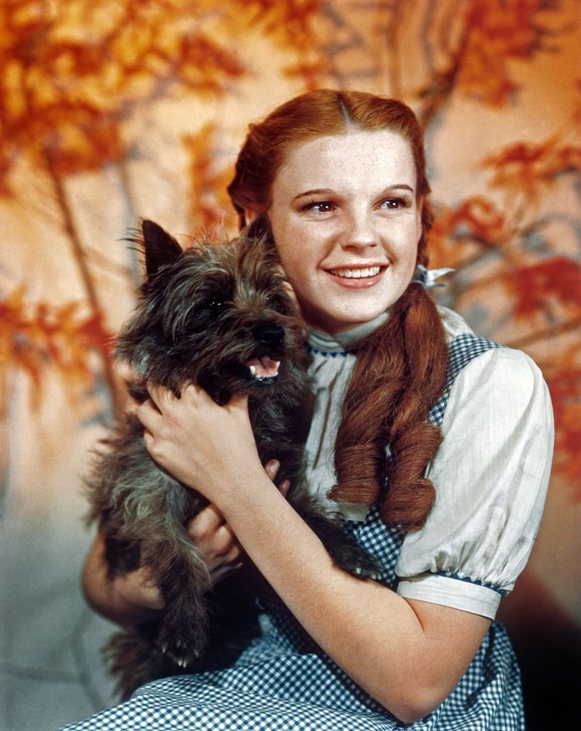 judy-garland-as-character-dorothy-gale-holds-toto-in-a-news-photo-1569615046.jpg