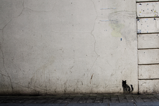A Katasztrófavédelem szerint a macska nem számít, mert nem ember
