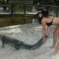 Birkózz aligátorokkal!