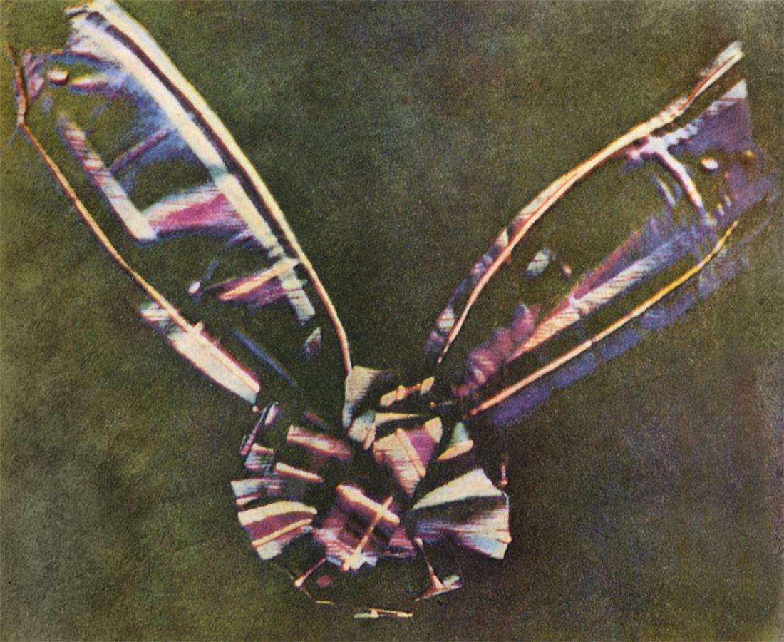 mxcptartan_ribbon.jpg