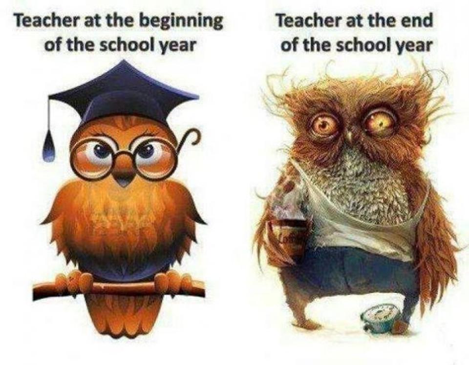 teacher_bagoly.jpg