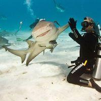Lepacsizott egy cápával