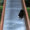 Napi betevő: cica a csúszdán