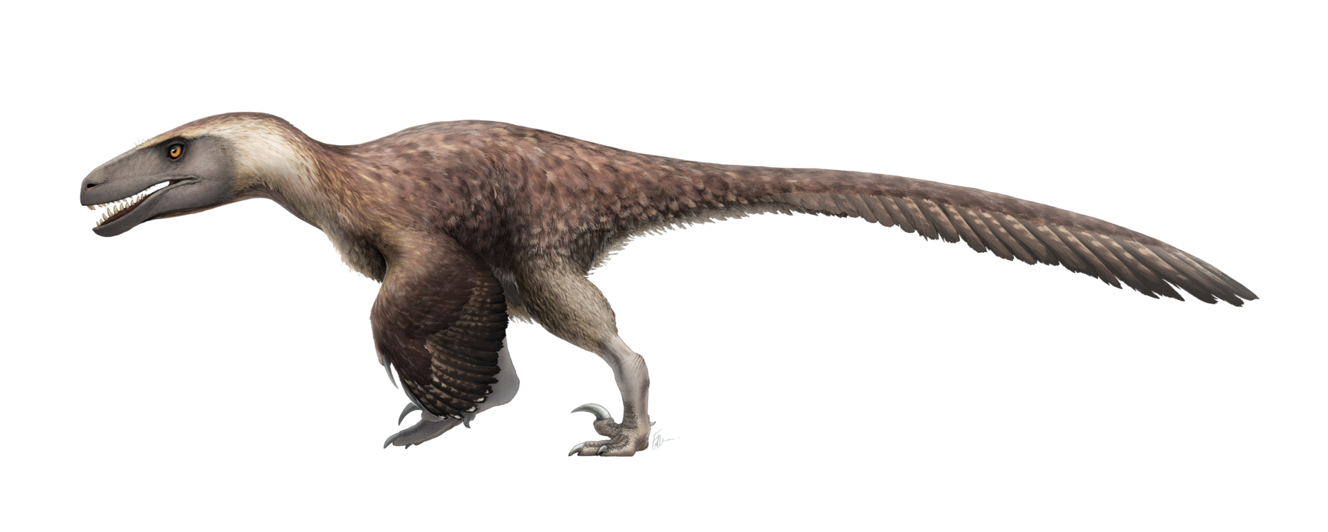 utahraptor_by_fred_wierum.png