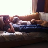 A nap képe: Webber és a kutyák