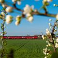 MDmot tavasszal