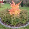 Megint itt az arany-ősz...