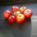 Almafa és gyümölcse