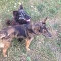 Mudi és Sinka