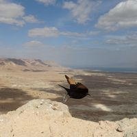 Felejthetetlen lebegés a Holt-tengeren