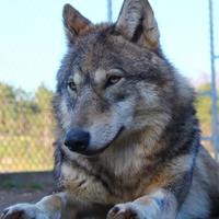 2014: farkasok hónapról hónapra