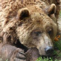 Két új mentett medve érkezik Spanyolországból a Medveotthonba