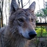 Belaktuk a farkaslakot
