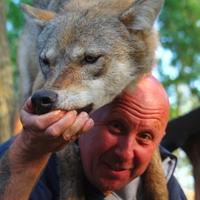 Fuss a farkasokért!