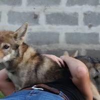 Mira & Lobo: túl az első tévészereplésen a kisfarkasok