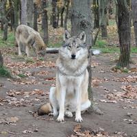 Óvóbácsi vigyáz a kölykökre a vadaknál