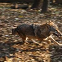 Farkas-ügy: nem fekete és fehér