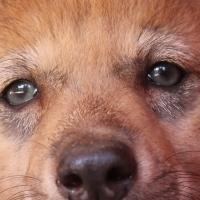 Farkasok Magyarországon Facebook közösség