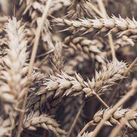 Mit jelent a mezőgazdaságban dolgozni?