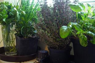Valentinnapi marhaságok - Spárgakrémleves, hátszín, chilis csokoládéval töltött levelestészta