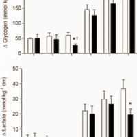Az L-carnitene + szénhidrát hatása az állóképességi sportolókra