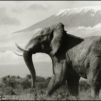 Elefántforma