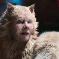 Cats-kac