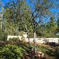 Schindler fája