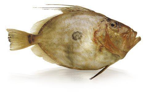 szent-peter-hala.jpg