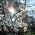Tavaszi örömpeca..