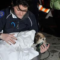 Íme, a tűzoltó, aki újraélesztett egy kutyát