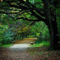 Sétálj erdőben, hogy egészségesebb legyél! Megmondták a brit tudósok