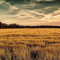 Mezőgazdaság 2.0 – Drónok, GPS, önjáró traktorok a földeken