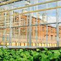 A legújabb berlini látnivaló: Európa legnagyobb városi farmja