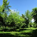 Egyetemisták parkja panoráma