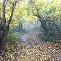 Ilyen az ősz nálunk