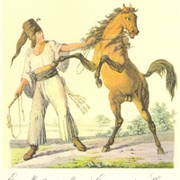 A kistermelői lófasz dicsérete