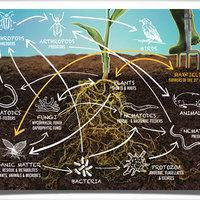 Globális aggódás2: Genetikailag módosítjuk a kukoricát, de NEM TUDJUK, HOGY EGY MARÉK FÖLDBEN MI VAN!