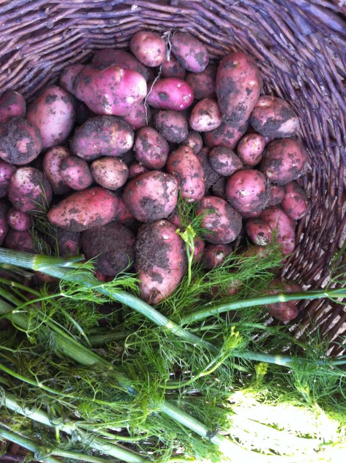 krumpli2_1.jpg