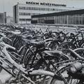 Halasi bajgyűjtemény '79