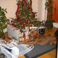 Karácsonyi Mózes :)